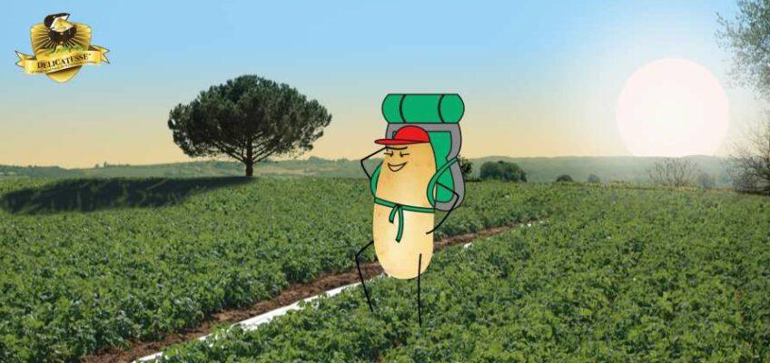 Partez vous évader en Drôme des Collines, le terroir de la pomme de terre Délicatesse !