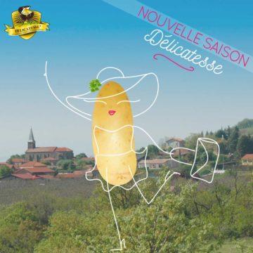 La pomme de terre Délicatesse bientôt de retour sur les étals !