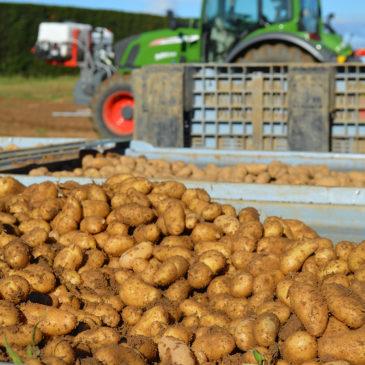 Récolte dans les champs de Délicatesse de la Drôme