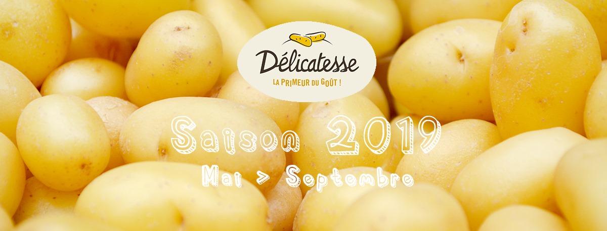 pomme-de-terre-delicatesse-saison-2019